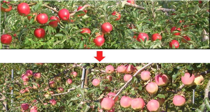 http://kajuen.net/senboku/blog/images/2008/2008-10-08.jpg
