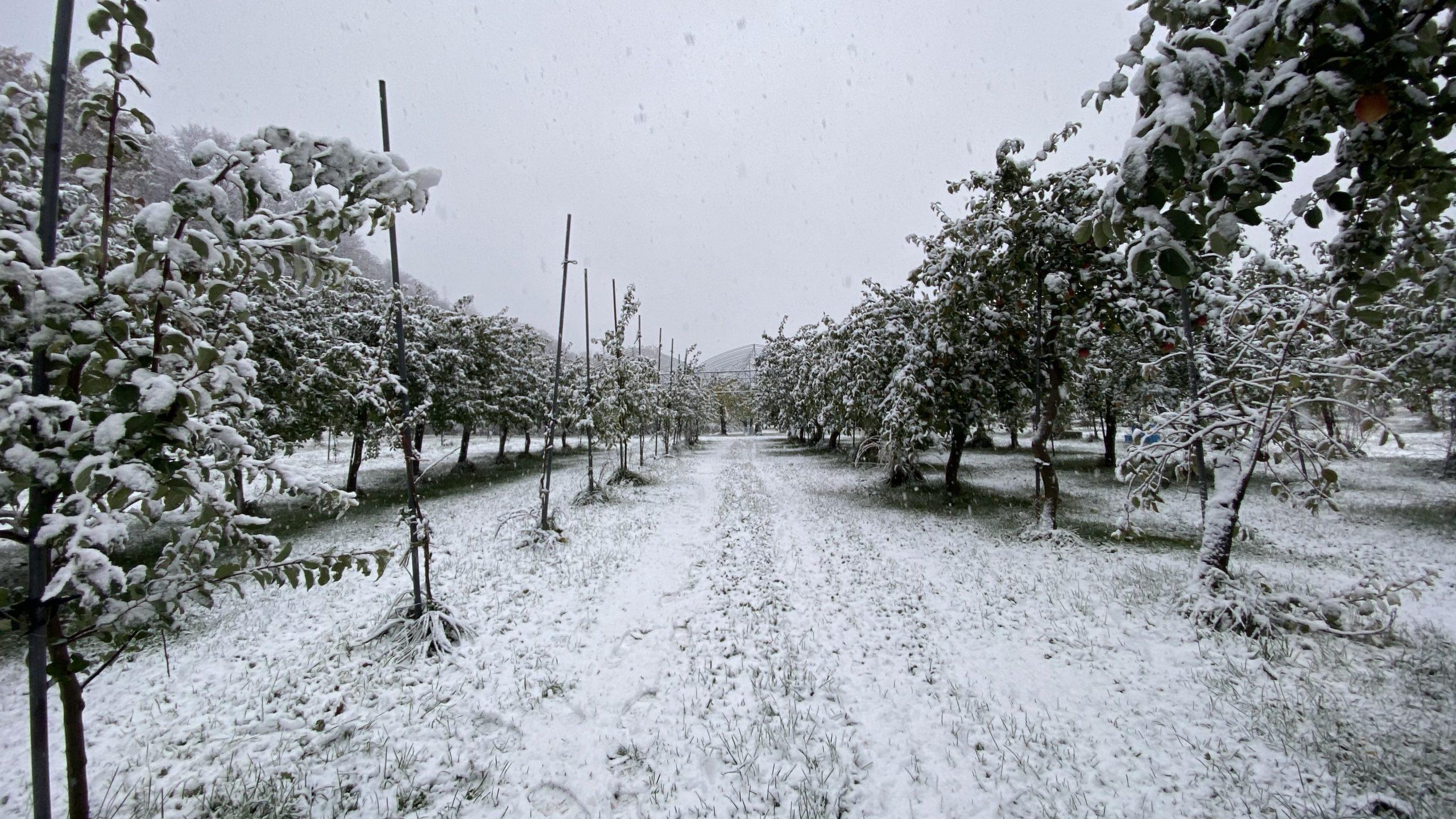 果樹園、冬、到来。